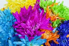 Fond coloré de fleur de marguerite Photos stock