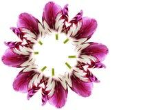 Fond coloré de fleur de tulipe de ressort avec l'espace de copie des textes Image stock
