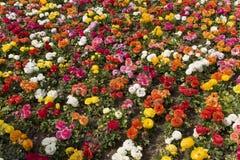 Fond coloré de fleurs Images stock