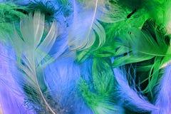 Fond coloré de plume Photos libres de droits
