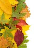 Fond coloré des feuilles d'automne d'isolement Images stock