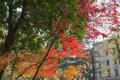 Fond coloré des feuilles d'automne tombées, automne coloré en parc de ville Photographie stock libre de droits
