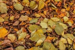 Fond coloré et lumineux fait de feuilles d'automne tombées Image stock