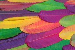 Fond coloré vibrant de beaucoup de feuilles d'automne photos stock
