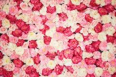 Fond complètement des pivoines blanches et roses photographie stock