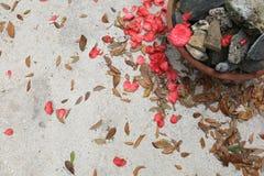 Fond concret avec des pédales de fleur, des feuilles et un pot de roche photo stock