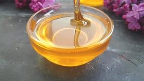Fond concret de fleur de miel de ressort de noir lilas de dipperon, composition clips vidéos