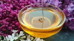 Fond concret de fleur de miel de ressort de noir savoureux lilas de dipperon, composition banque de vidéos