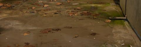 Fond concret de plancher avec la porte de feuilles, de saleté et en métal images libres de droits