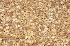 Fond écrit de graines Images stock