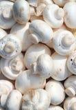 Fond cru de champignons de couche Images libres de droits