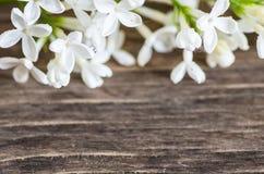 Fond décoratif de fleurs photo libre de droits