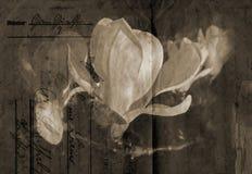 Fond démodé de magnolia illustration stock