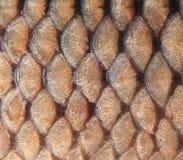 Fond d'or - échelles de poissons Image libre de droits