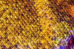 Fond d'échelles de poissons d'or Photos stock
