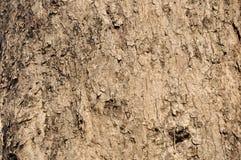 Fond d'écorce d'arbre Photographie stock