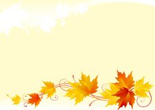 Fond d'érable d'automne Photographie stock
