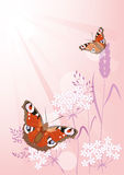 Fond d'été avec des fleurs et des papillons Photo stock