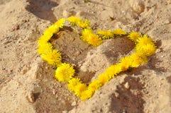 Fond d'été avec des pissenlits dans une forme de coeur sur le sable Photographie stock