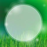 Fond d'été avec l'herbe verte Photographie stock libre de droits