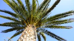 Fond d'été de palmier banque de vidéos