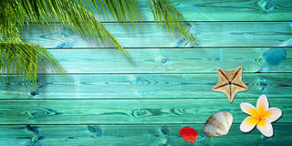 Fond d'été, palmiers et coquilles de mer photographie stock