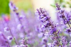 Fond d'été : une fleur de pré d'été des fowers colorés S photo stock