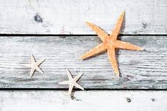 Fond d'étoiles de mer ou d'étoile de mer Image stock