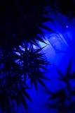 Fond d'abrégé sur cannabis de marijuana Images stock