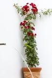 Fond d'abrégé sur rose de rouge Photo stock