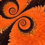 Fond d'abrégé sur spirale d'infini de fleur de Gerbera Image libre de droits