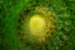 Fond d'abrégé sur tache floue de nature Photo libre de droits