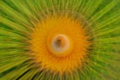Fond d'abrégé sur tache floue de nature Photo stock