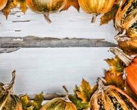 Fond d'action de grâces Potirons sur un fond en bois blanc L'espace libre pour le texte Vue de ci-avant Images stock