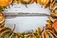 Fond d'action de grâces Potirons sur un fond en bois blanc L'espace libre pour le texte Vue de ci-avant Photo stock