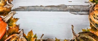 Fond d'action de grâces Potirons sur un fond en bois blanc L'espace libre pour le texte Vue de ci-avant Image stock