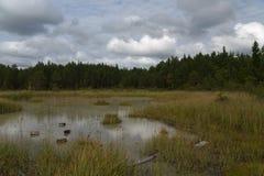 Fond d'aftenoon de septembre de forêt et de lac blanc, nature estonienne Photos stock