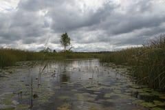 Fond d'aftenoon de septembre de forêt et de lac blanc, nature estonienne Images libres de droits