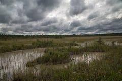 Fond d'aftenoon de septembre de forêt et de lac blanc, nature estonienne Images stock