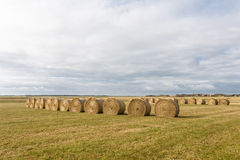 Fond d'agriculture Photo stock