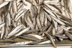 Fond d'anchois Images libres de droits