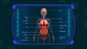 Fond d'animation de graphiques de diagramme d'organes internes illustration libre de droits