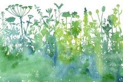 Fond d'aquarelle avec des herbes et des fleurs de dessin Photos libres de droits