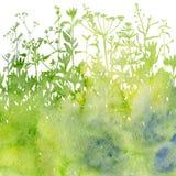 Fond d'aquarelle avec des herbes et des fleurs de dessin Photos stock