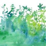 Fond d'aquarelle avec des herbes et des fleurs de dessin Image stock