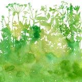 Fond d'aquarelle avec des herbes et des fleurs de dessin Photo stock