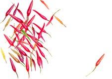 Fond d'aquarelle de poivrons de piment Image stock