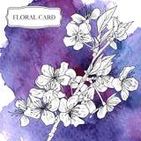 Fond d'aquarelle de vecteur avec des fleurs de cerisier illustration de vecteur
