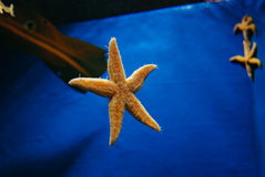 Fond d'aquarium photos stock