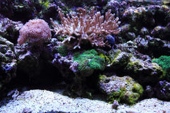 fond d'aquarium de mer Photo stock